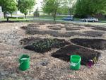 Planting of Keyhole Garden Started