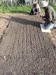 Gardeners Prepare their Allotment