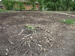 Gourd Plantings With Three Sisters Bed Behind