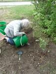 Planting Fruit