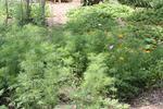 Garden42
