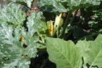 Garden50