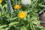 Garden59