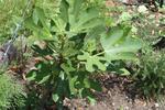 Garden60