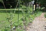 Garden61