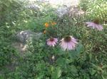 Garden71