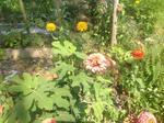 Garden81