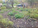 Garden145