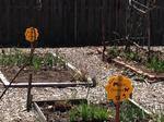Garden26