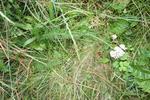 Meadow 9
