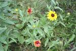 Meadow 10