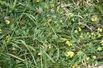 Meadow 15