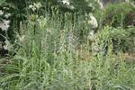 Meadow 19