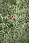 Meadow 21