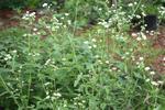 Meadow 23