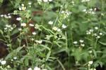 Meadow 24
