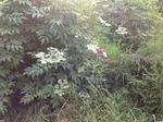 Meadow 32