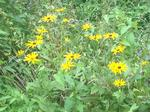 Meadow 43 by Campus Community Garden Project: University of Windsor